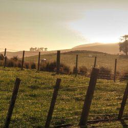 Morning sun at the Annandale Farm